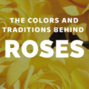 The Colors and Traditions Behind Roses