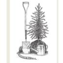 September Tips: Trees, Shrubs and Groundcovers