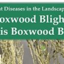 Boxwood Blight YouTubes
